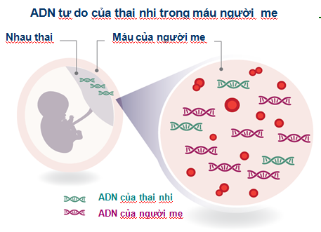 xét nghiệm ADN thai nhi cần những gì1