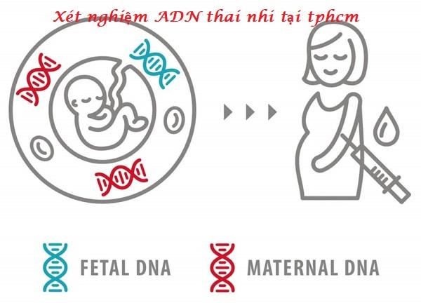 xét nghiệm adn thai nhi tại tphcm